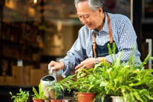 Asian senior man taking care of plants